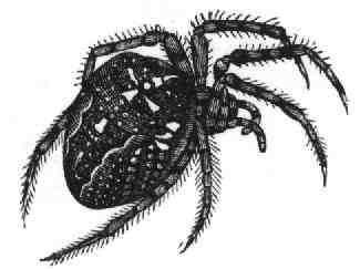 Un autre spider